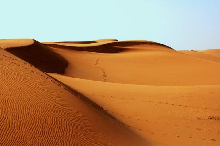 How to SURVIVE IN Desert?